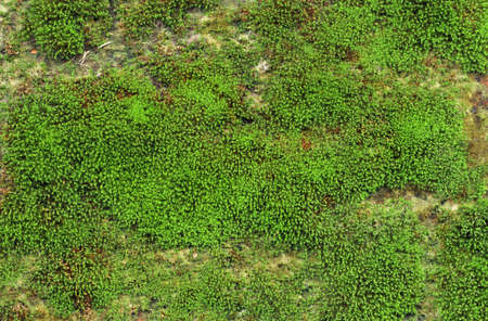 Close up of green moss texture background is growing on the old stone wall.