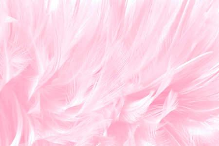 Beautiful soft pink bird feathers pattern texture background. Imagens