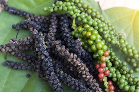 Close-up of black pepper,green fresh,ripe and green leaf on wood floor.
