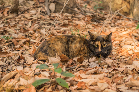 cute bi: Cat sleeping in the forest