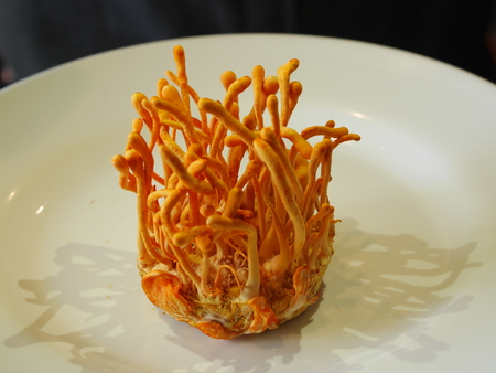 Cordyceps Militaris Stock Photo