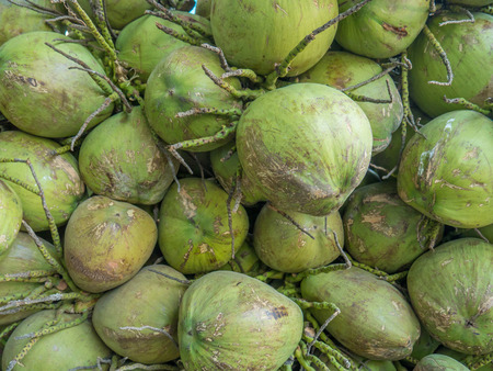 Topical coconuts Stock Photo