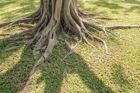 The root of the tree in the green grass