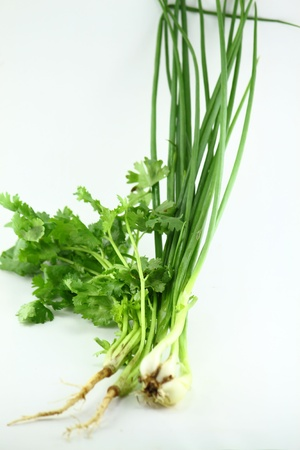 coriander and Onion photo