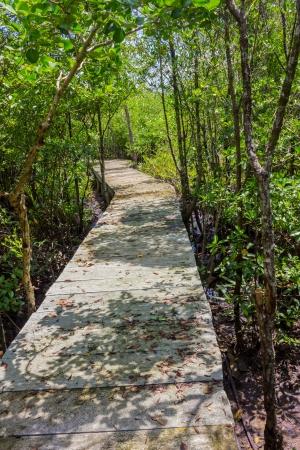 mangroves: Boardwalk through the mangroves