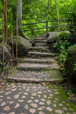 Stone steps that lead to a waterfall in the deep forest. photo