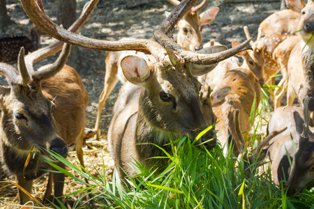 Close up of deer in the forest photo