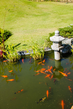 Koi fish in japanese garden photo