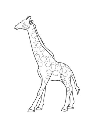 Giraffe Coloring Page For Kids. Giraffe Coloring worksheet  game or giraffe cartoon coloring page vector