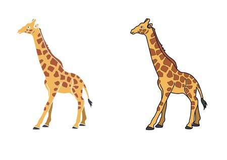 Giraffe cartoon for Kids. Colored  giraffe  cartoon or giraffe cartoon  clipart vector 向量圖像