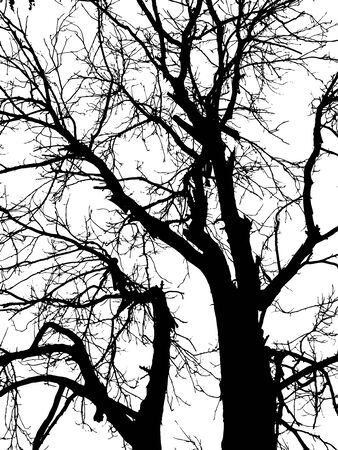 silhouette of tree twig or Realistic silhouette of tree bare branches without leaves on a white background. Tree Twigs Silhouette Ilustracja