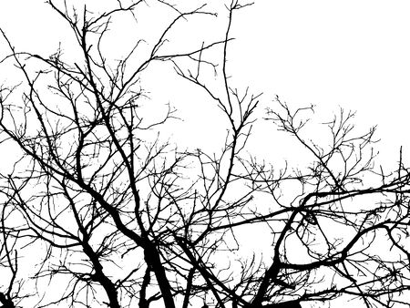 silhouette of tree twig or Realistic silhouette of tree bare branches without leaves on a white background. Tree Twigs Silhouette Vector Zdjęcie Seryjne - 135701865