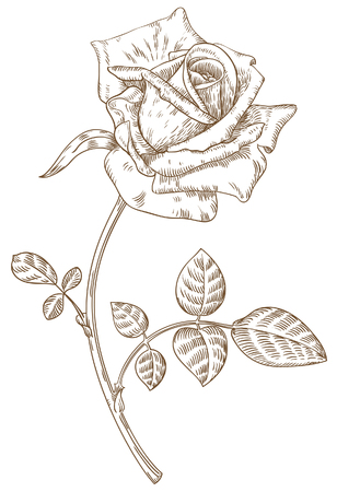 Old-styled vector rose. Freehand drawing