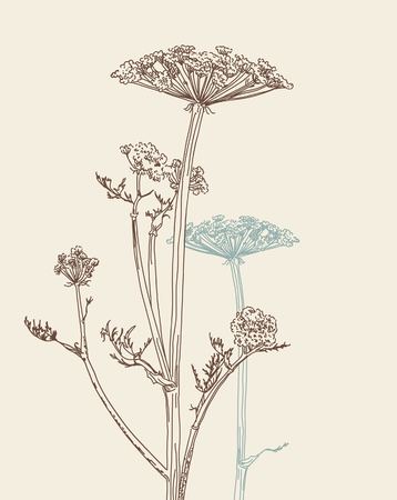 vector freehand drawing of umbellate plant Ilustracja