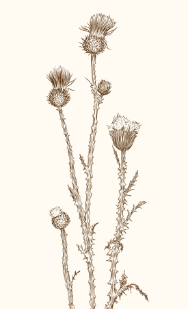 old-styled vector thistle. Freehand drawing