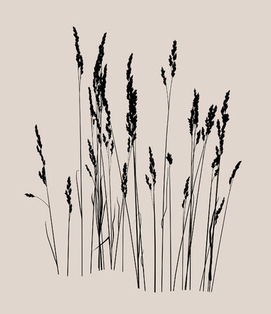 panicle: Vector drawing. Floral background with grass Illustration