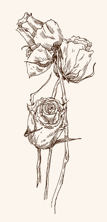 old-styled vector rose. Freehand drawing Illustration