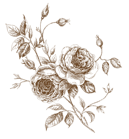 old-styled vector rose. Trace of freehand drawing