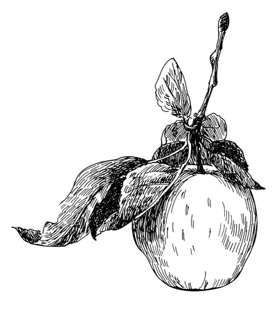 old-styled apple. Trace of freehand drawing Ilustracja