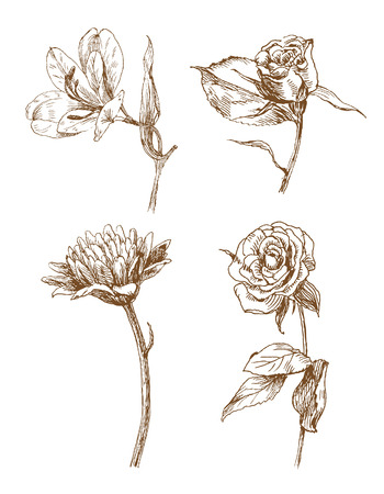 old-styled flowers. Trace of freehand drawing