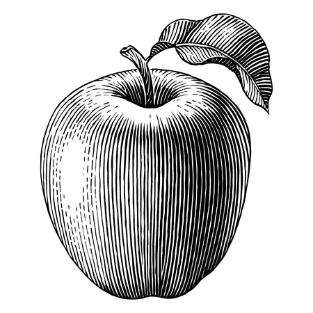 dessin noir et blanc: Illustration grav�e d'une pomme Vector