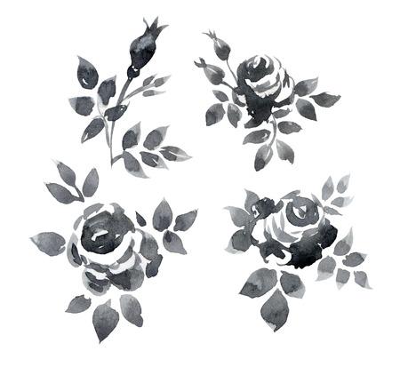 conjunto de rosas de la acuarela pintados a mano