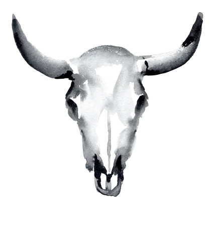 ox: watercolor cow skull, vector illustration