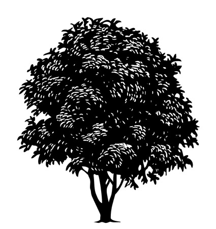 engraved image: Vector tree in engraved style