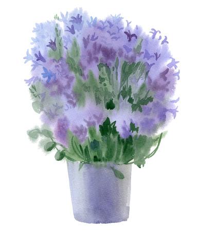 campanula: Watercolor bouquet of campanula. Vector illustration