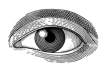 silueta humana: Ilustración del vector del ojo humano en el estilo de grabado