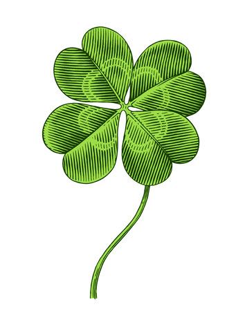 four leaf: Engraved illustration of four leaf clover