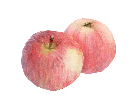 Watercolor illustration of two red apples Stock Photo