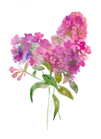 Watercolor illustration of bouquet of phlox.