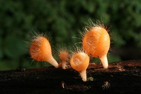 mushroom, Thailand Stock Photo