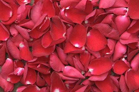 Schöne rote Rosen Blütenblätter auf Holz. Valentinstag, Jahrestag usw. Hintergrund.