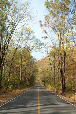 winter escape: Empty road in forest. Stock Photo