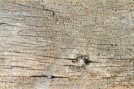 Texture of old wooden with nail background Banco de Imagens