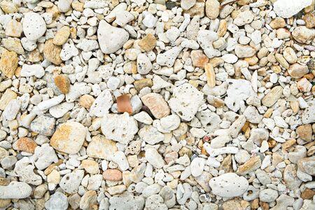 Dead coral on the beach.
