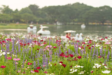 Flower field and defocused of lake background. Selective focus.