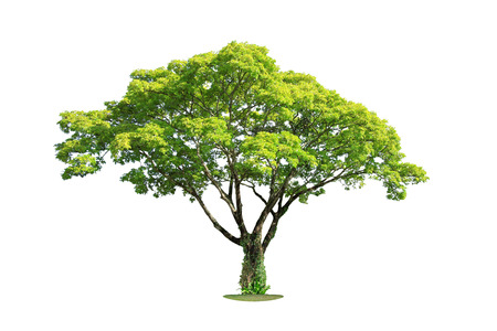Tree isolated on white background. Clipping path. Banco de Imagens