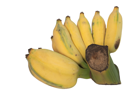 riped: Whole bunch of semi riped yellow banana isolated on white Stock Photo