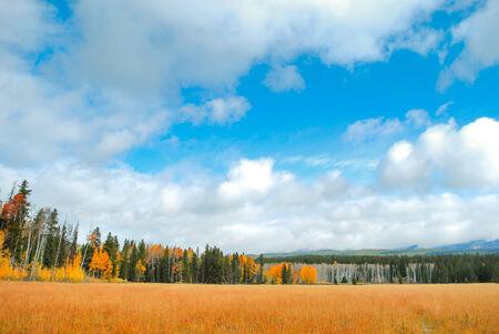 Yellow grassland  photo