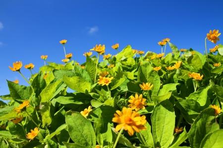 Tinny yellow flowers Stock Photo