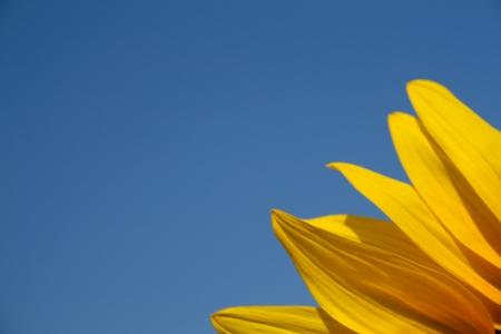 Sunflower segment template Stock Photo