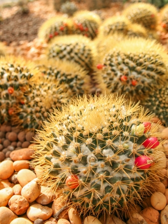 Cactus field photo