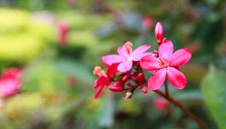 Tiny wild flower