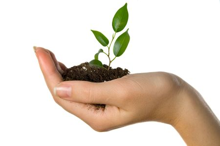 Plant in hand on white background Stock Photo - 3099011