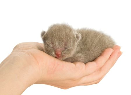 New-born kitten in hand. Isolated on white background Stock Photo - 3102562