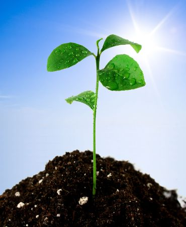 Plant in soil and blue sky with sun Stock Photo - 3102584