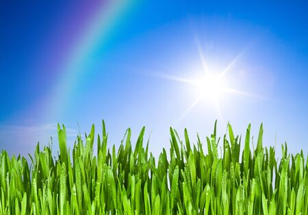 Green grass and blue sky with sun photo